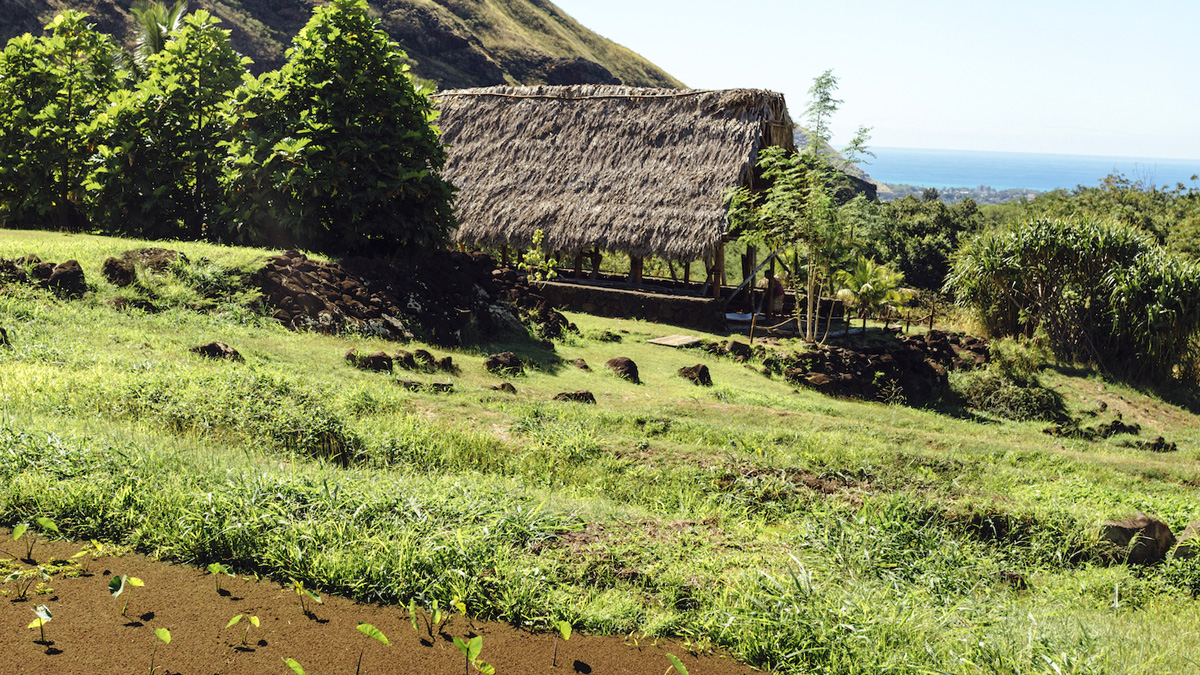 Kaʻala Farm - Organic Oahu Farm